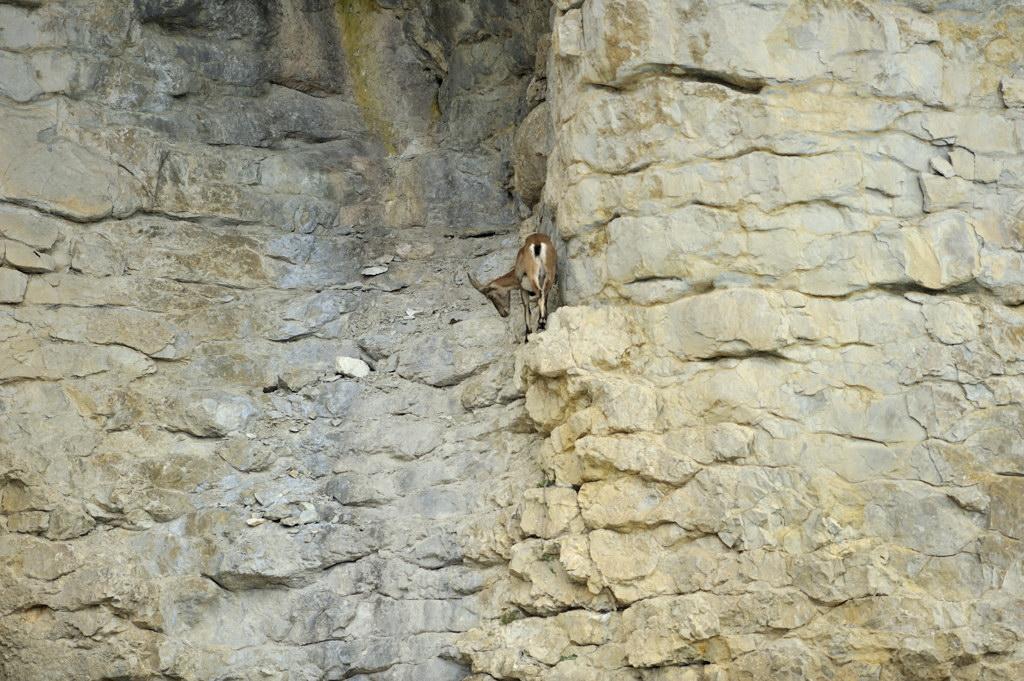 Archiane, Glandasse : Bouquetins File